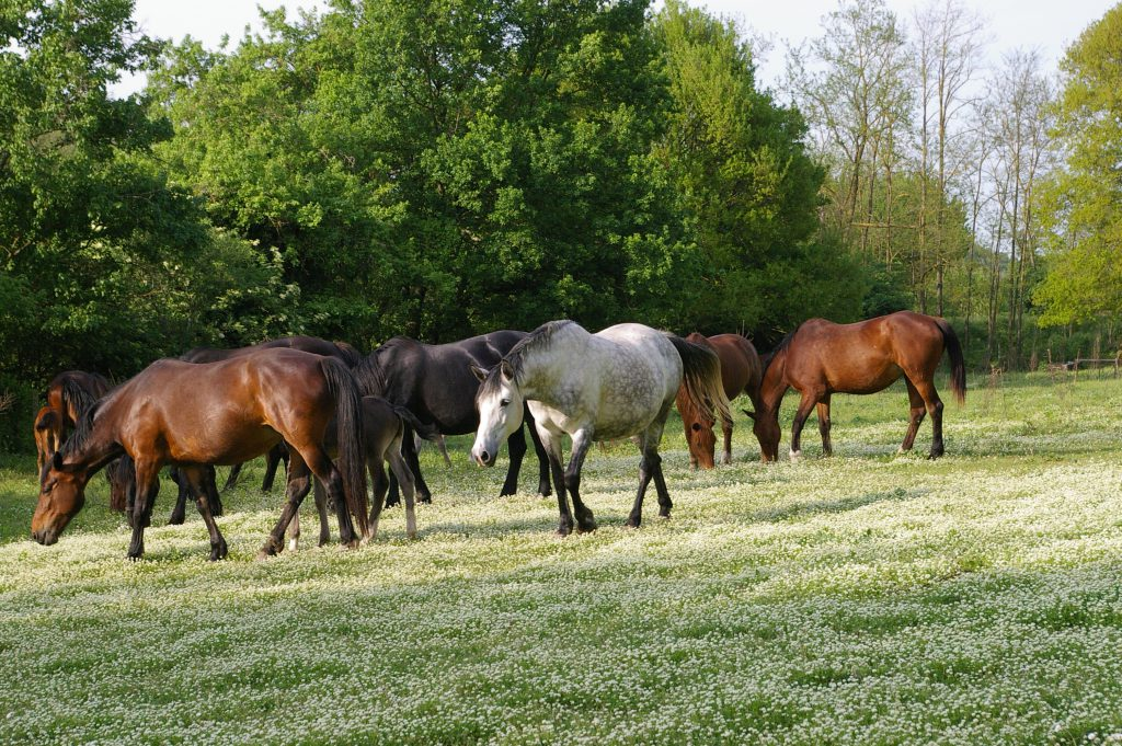 The herd of pasture horses
